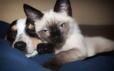 Feline Infectious Peritonitis (FIP) and Canineparvovirus Vaccine